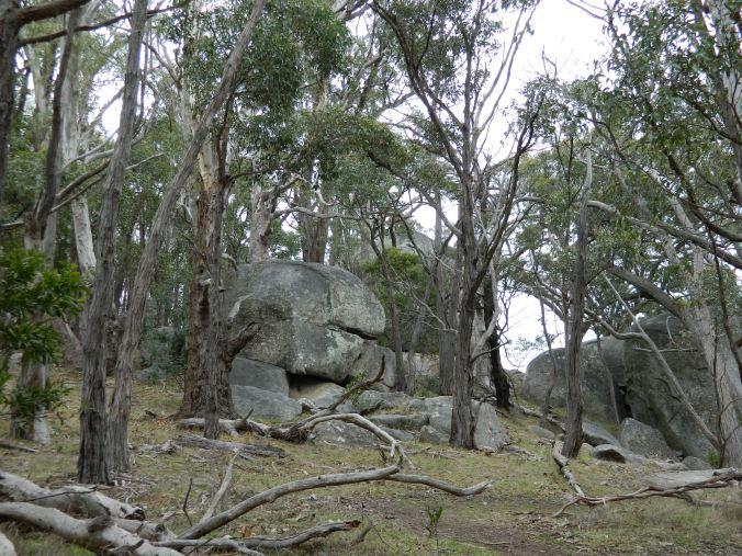 Image of rocks on Mt Alexander