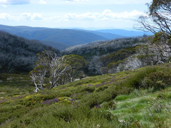 View over Alpine National Park