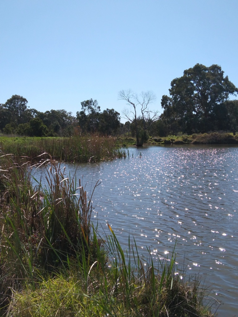 View across Sports Field lake towards Darebin Creek