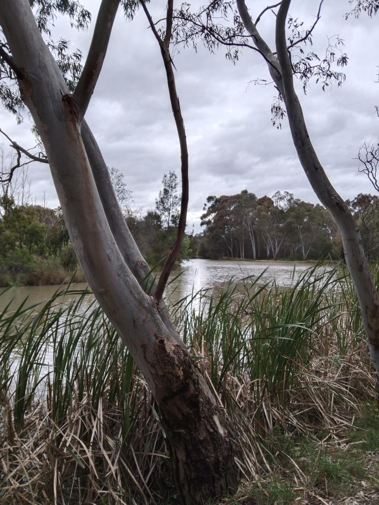Reeds and water - Sports Field Lake, nangak tamboree