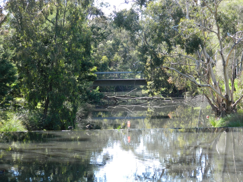 View of water in the moat and gum trees