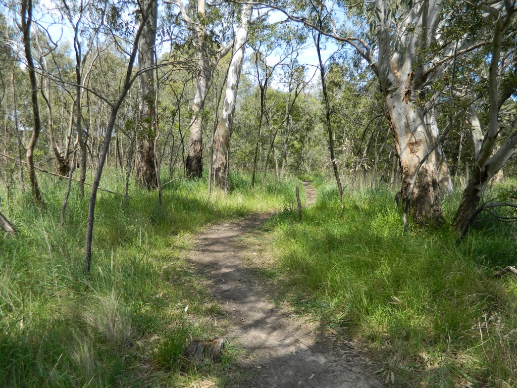 A track through long grass