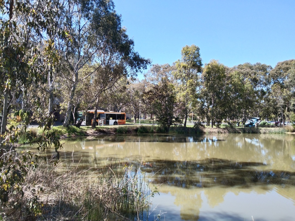 Waterhole ringed by trees with bus passing