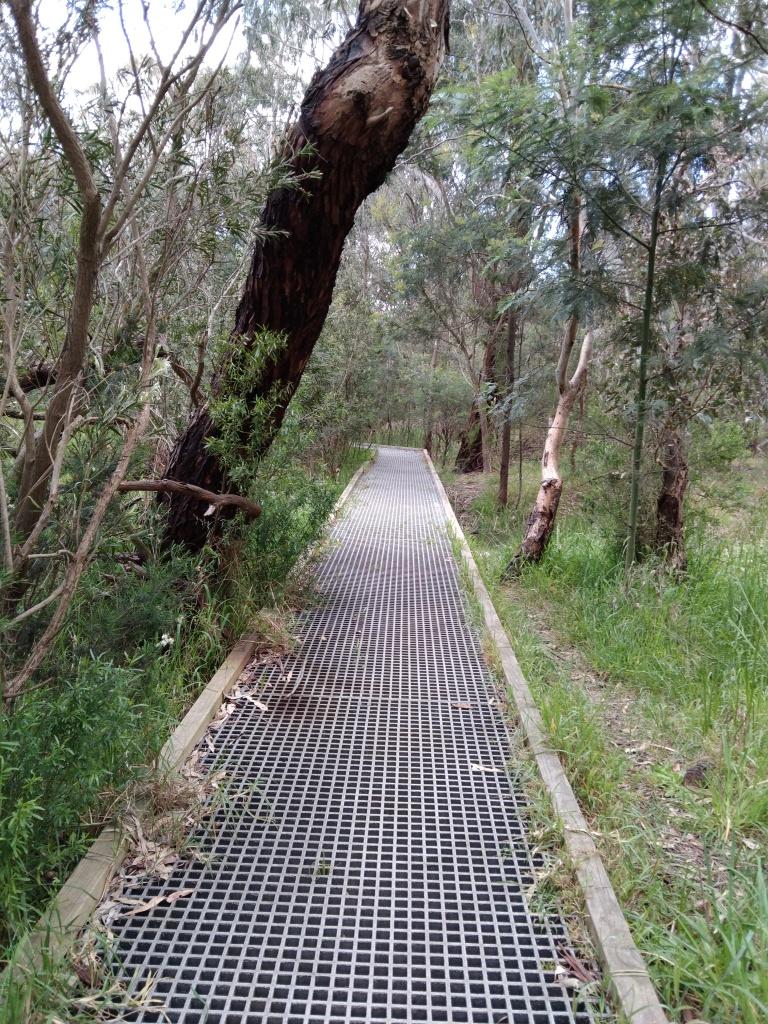 Walkway through bush