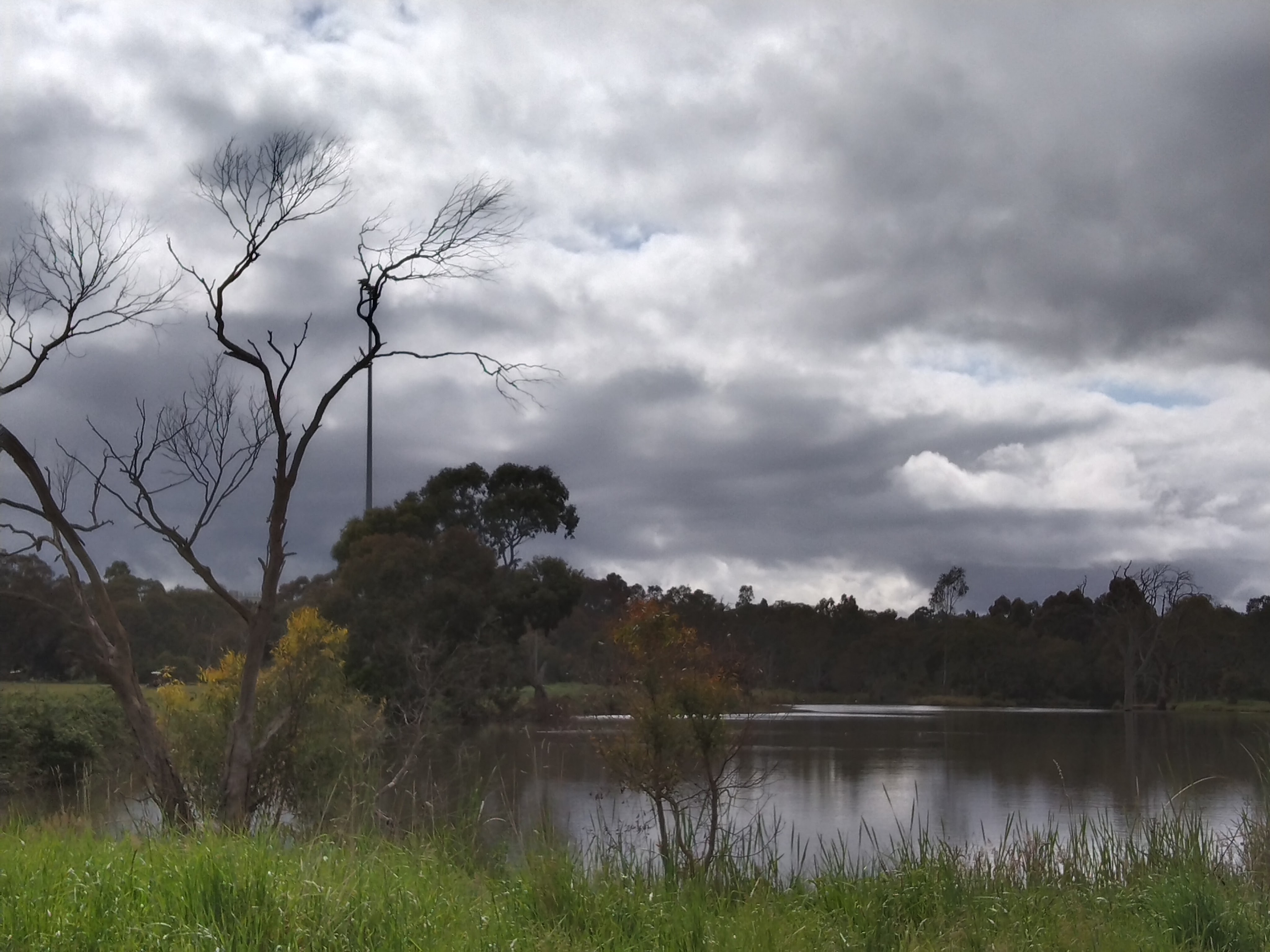 lake with dead tree