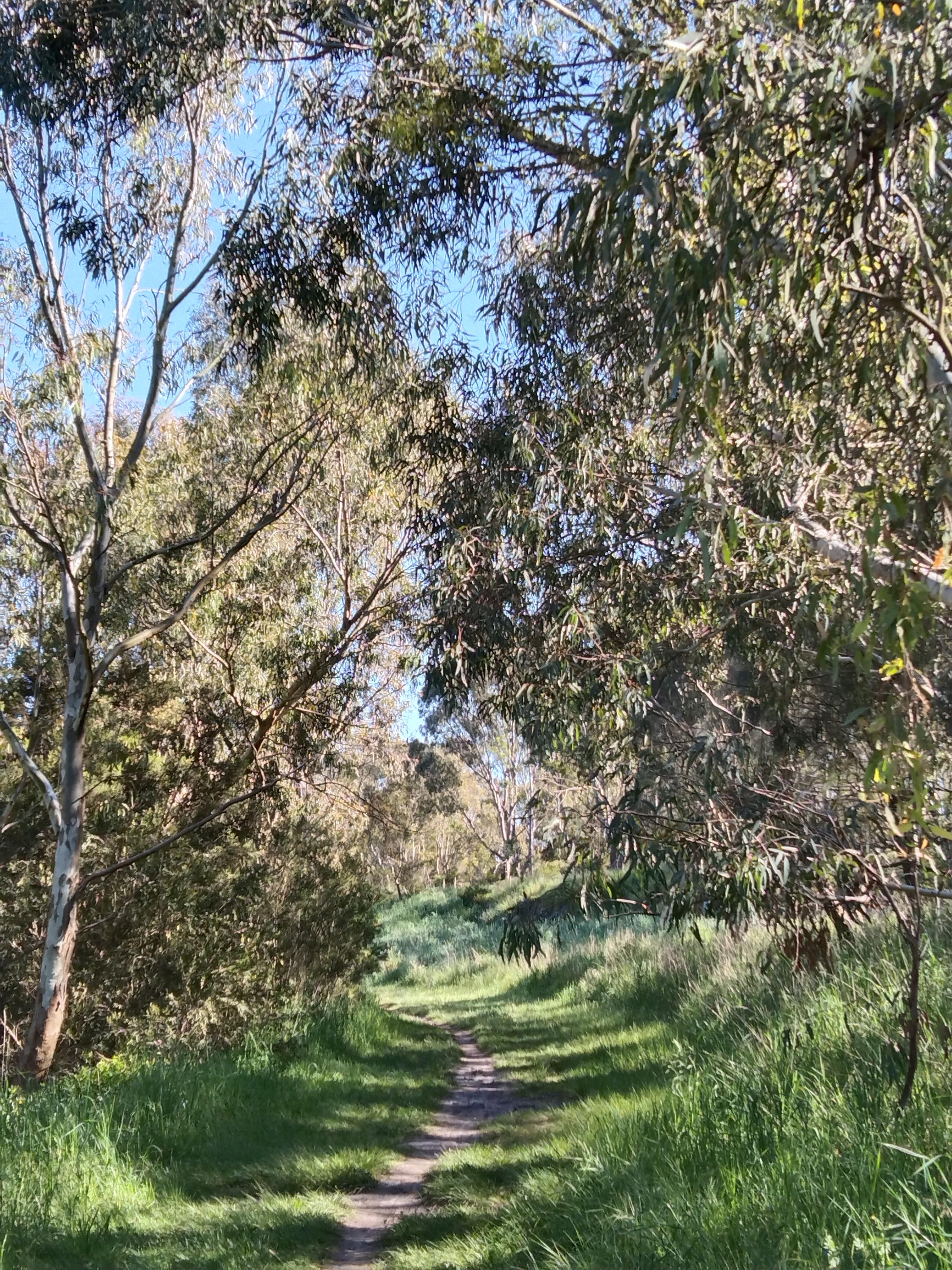 Track through bush