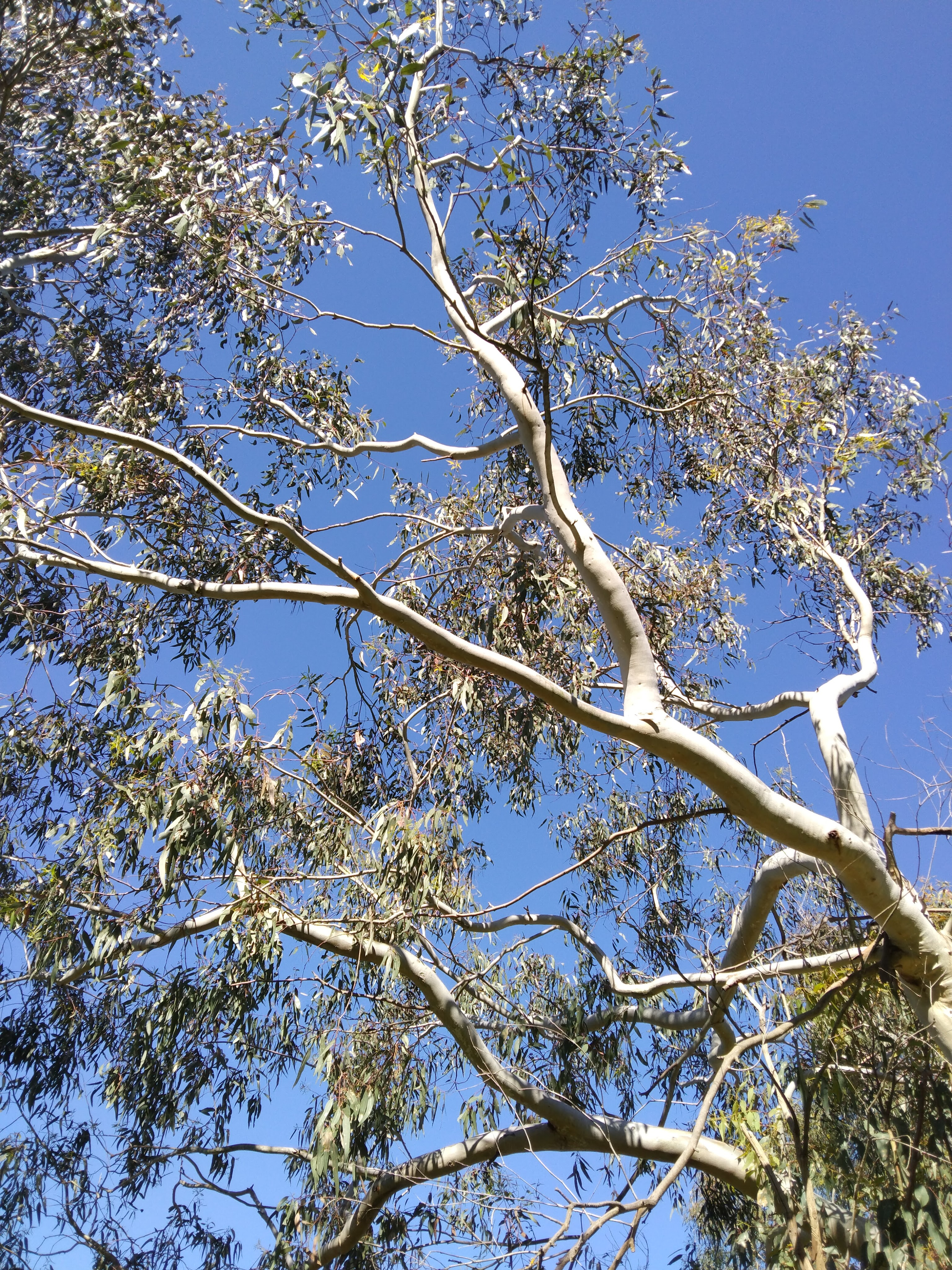 Tree branches against bright sky
