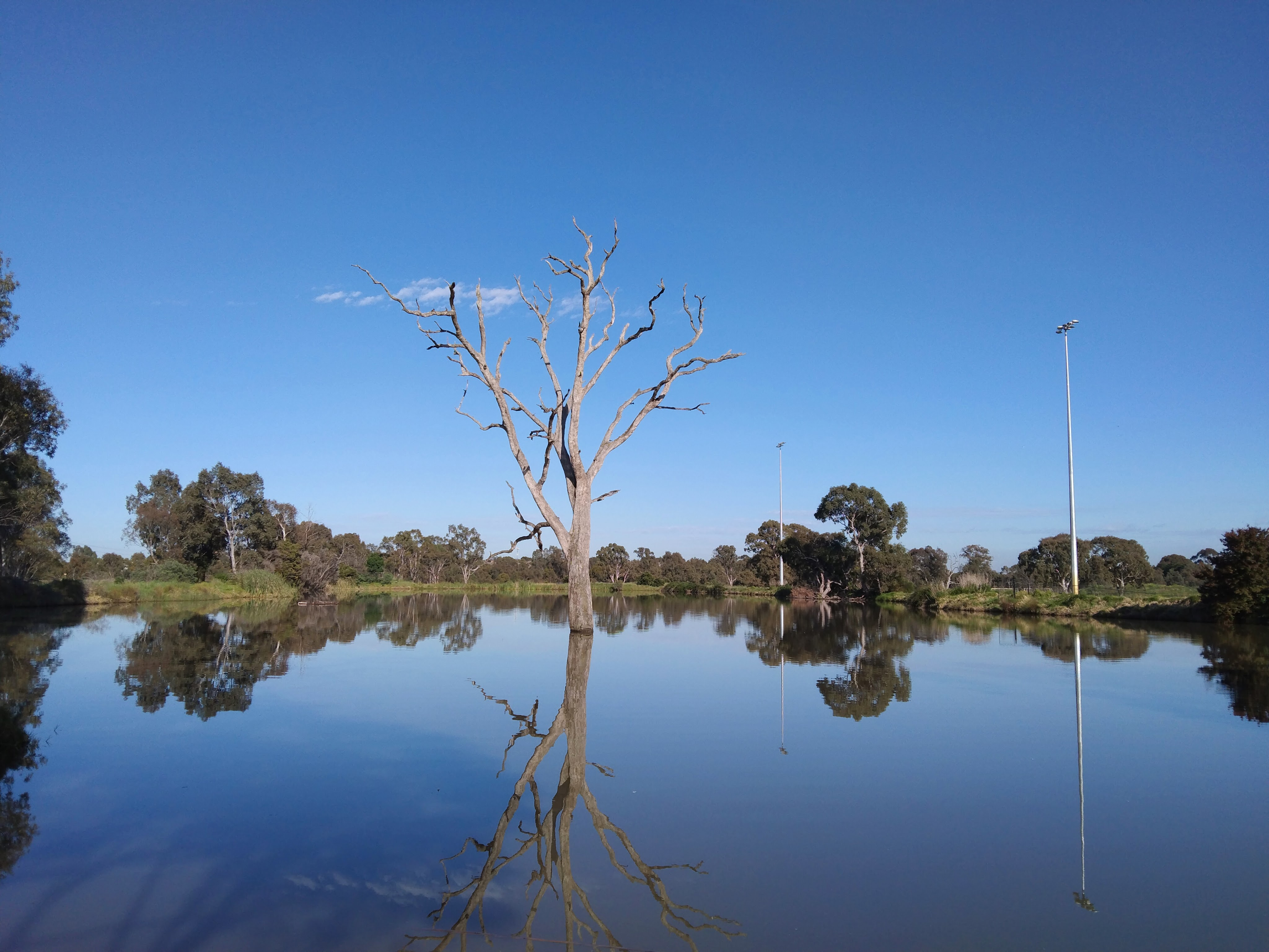 Lake with dead tree and reflection