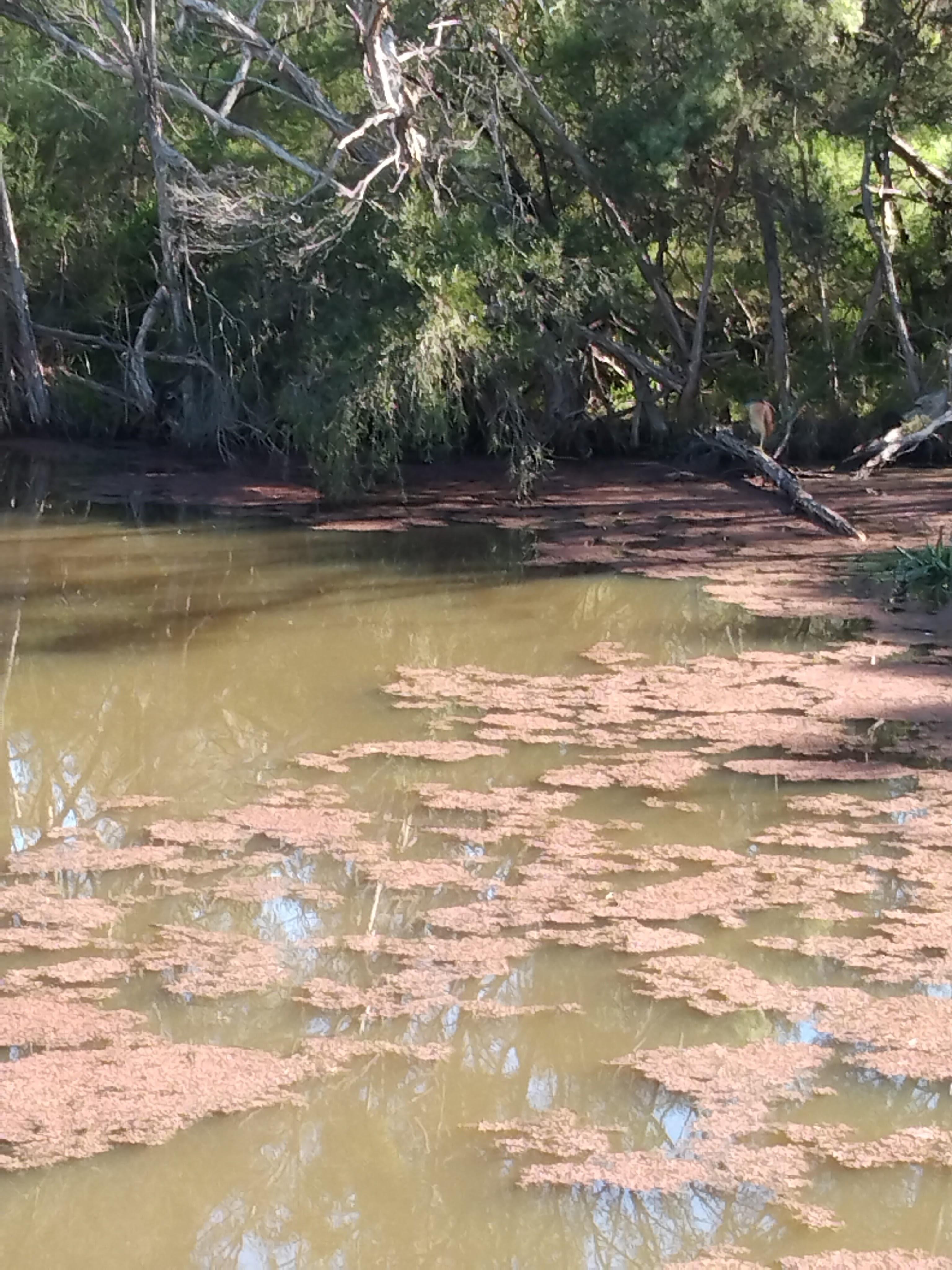 Muddy waterhole