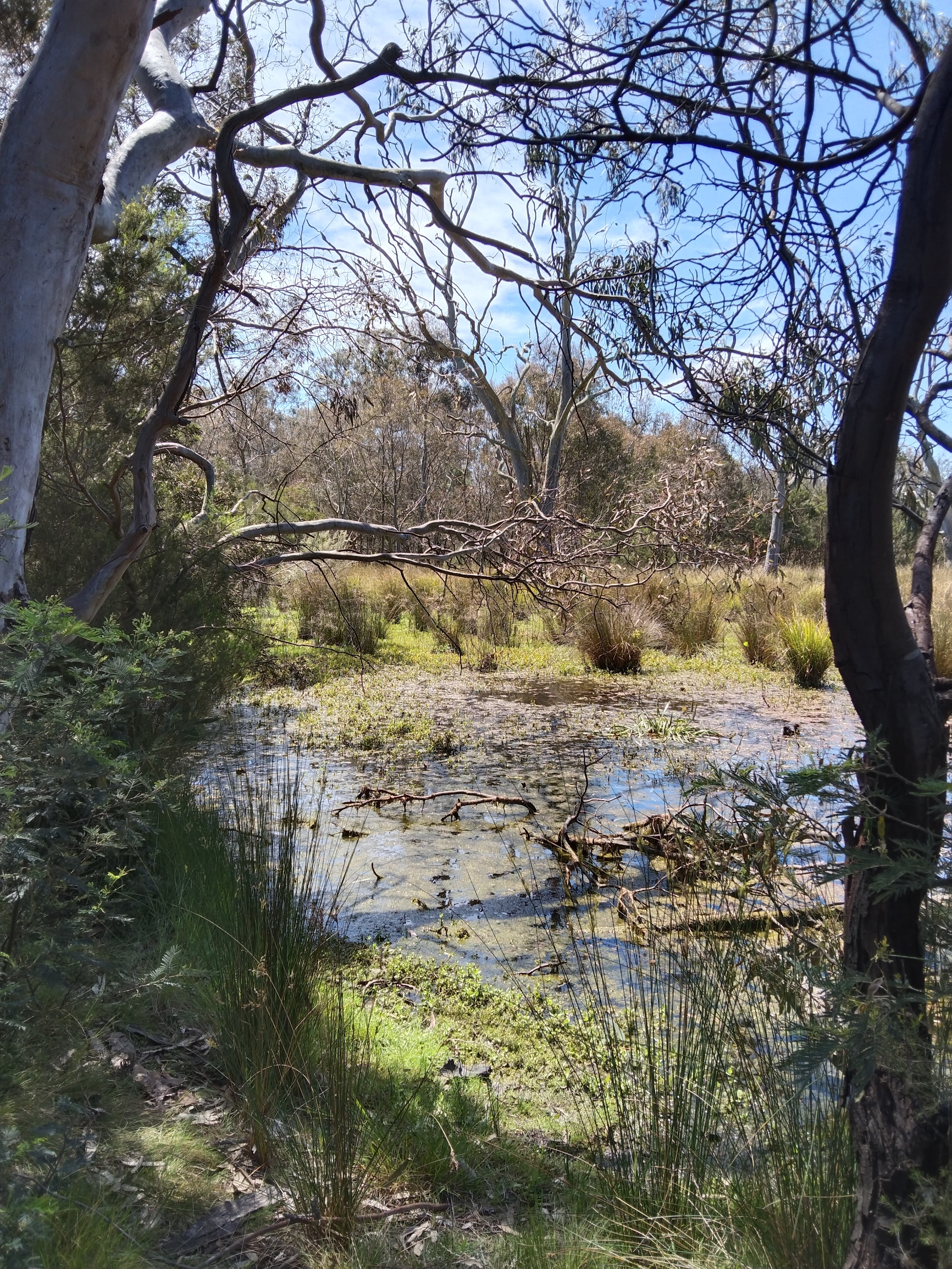 Swamp with trees and reeds