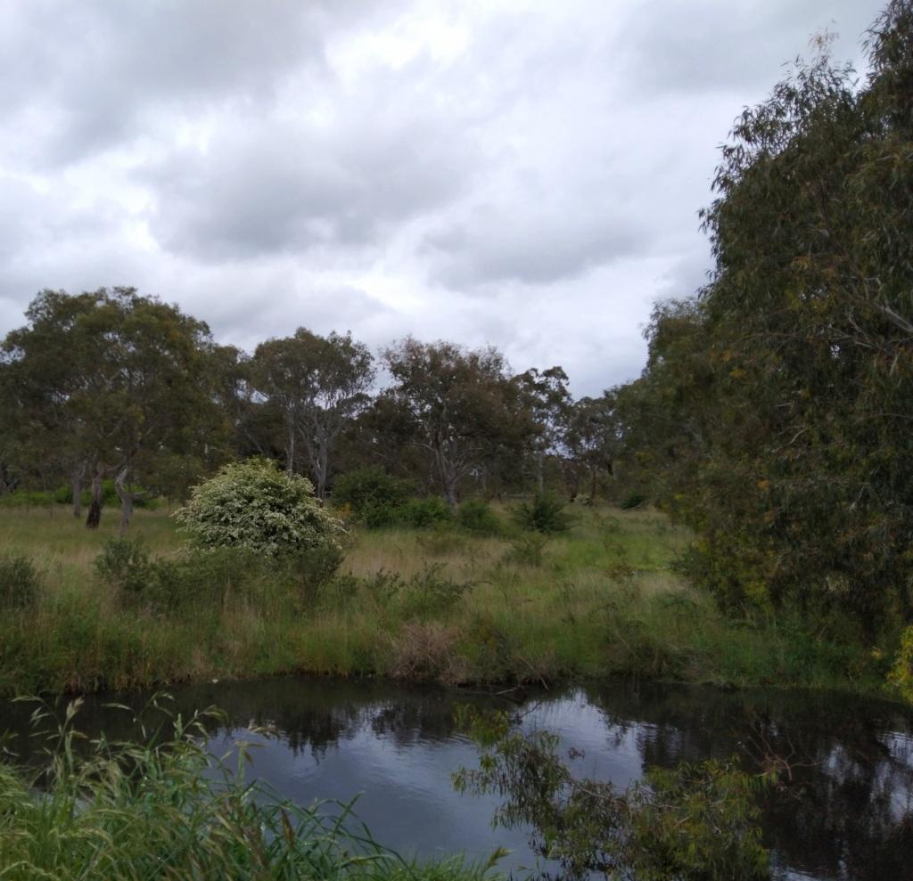 waterhole, grasslands, trees.